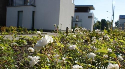 Kwiatowe osiedle